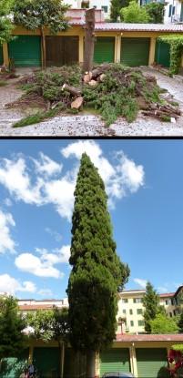 Distrutto lo splendore della natura