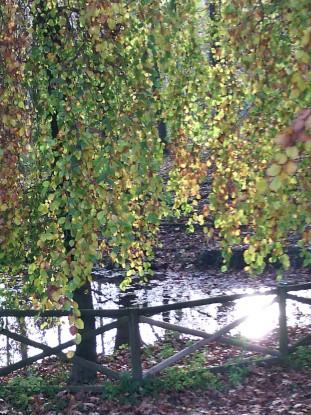 E' già autunno