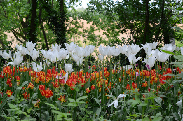 Tutti i colori della primavera in una foto